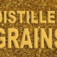 Distiller Grains