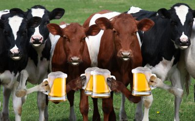 BEER – Cows Love It As Much As We Do